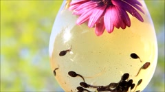 Tadpoles swimming in a glass with pink flower Stock Footage