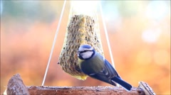 Feeding wild birds with fat bird food Stock Footage