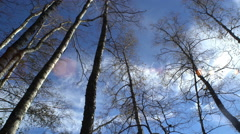 Trunks of trees without leaves in the sunlight. Stock Footage