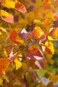 Fall season natural colorful background of macro leaves Stock Photos