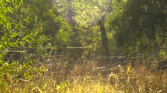 Web Yarns in the Fall on the Blurry Yellow Background of the Trees Stock Footage