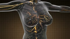 Loop science anatomy scan of woman blood vessels glowing with yellow Stock Footage