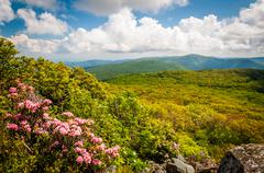 Mountain laurel and view of the Blue Ridge on Stony Man Cliffs in Shenandoah  Stock Photos