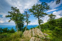 Rocks and trees at Jewell Hollow Overlook in Shenandoah National Park, Virgin Stock Photos