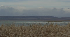 Pan across snow geese filled marsh and distant mountains and clouds Stock Footage