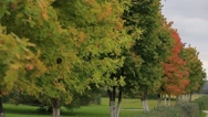 Autumn trees, cloudy. Stock Footage