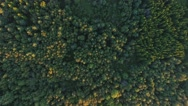 Aerial view to green summer forest and power line Stock Footage