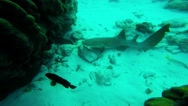 Nurse Shark & Moray Eel Stock Footage