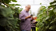 Old man calling on smartphone in farm greenhouse Stock Footage