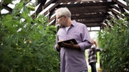 Old man with tablet pc in greenhouse on farm Stock Footage