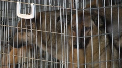 Dog in a cage. Dog shelter Stock Footage