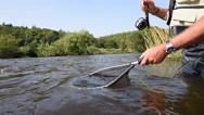 Fly-fisherman catching trout in irish river Stock Footage