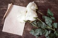 Blank paper card with white roses Stock Photos
