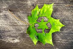 Green maple leaf with recycle symbol Stock Photos