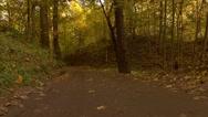 Steadicam walk through autumn forest road. 4K video Stock Footage