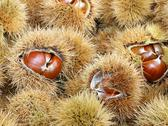 Chestnut cupules and brown chestnut in the basket in autumn Stock Photos