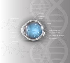 Normal eye anatomy scientific DNA background Stock Illustration