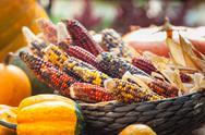 Fresh multicolored corn vegetable Stock Photos