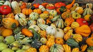 Decorative Pumpkins for halloween party for sale at the greengrocers Stock Photos