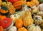 Decorative Pumpkins for halloween for sale at the greengrocer shop Stock Photos