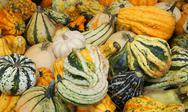 Real pumpkins to decorate the house during the halloween party Stock Photos