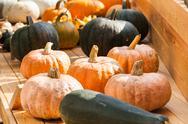 Autumn harvest pumpkin Stock Photos