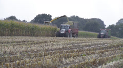 Forage at harvest of corn Maize Stock Footage