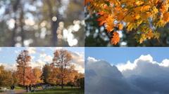 Autumn mood. Sunny day in autumn park. Stock Footage