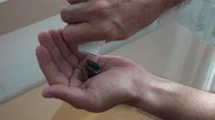 Shot of handfull of drug pills into hand 4k UHD Stock Footage