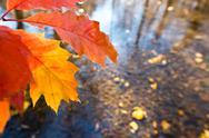 Detail of leaf in the autumn Stock Photos