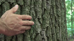 Concept of nature and ecology:man's hand caressing a trunk of tree 4k UHD Stock Footage