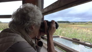 Senior woman photographer takes picture in bird hide Stock Footage