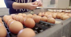 Chicken farm sorting eggs, agriculture Europe Stock Footage