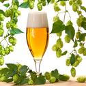 Glass of beer with hops on the white background Stock Photos