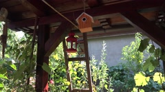 House for birds hanging from the porch and spinning 4k UHD sound Stock Footage