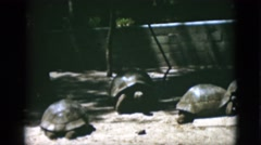 1952: giant turtles at the zoo, just chilling CAMDEN, NEW JERSEY Stock Footage