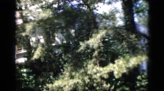 1952: beautiful secluded house in the forest tranquil and peaceful ambiance Stock Footage