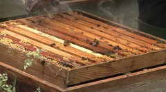A bee keeper smokes the bees in the hive. Stock Footage