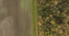 An aerial view above a northern park. Pavlovsk, Russian Federation Stock Footage