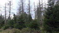 4k Dead trees woodland rough nature panning mountain range Harz Germany Stock Footage