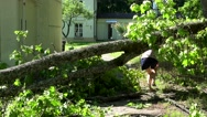 Female house owner walk over fallen tree after storm Stock Footage