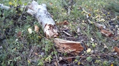 Rotten wood lying on the grass Stock Footage