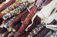 Decorative dried corn stalks at market Stock Photos