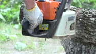 Worker man hands with gloves sawing thick maple tree trunk with chainsaw Stock Footage