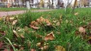 Mushrooms on city Avenue Stock Footage