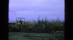 1965: construction taking place on the vast amount of land in the country MEXICO Stock Footage