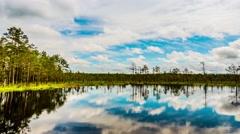 Swamp Viru Raba in Estonia Stock Footage