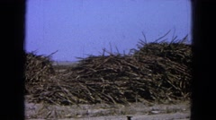 1965: bunches of sticks or branches piled in a long line MEXICO Stock Footage