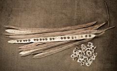 Dried Moringa pods and seeds on sackcloth Stock Photos