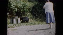 1961: woman in skirt taking picture of bear eating trash out of trash can Stock Footage